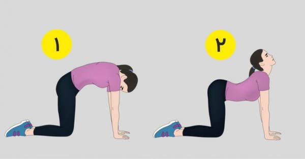 حرکات اصلاحی گودی کمر,ورزش برای گودی کمر,ورزش های گودی کمر