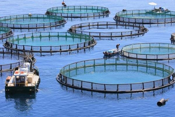 آموزش پرورش ماهی قزل آلا,انواع روش های پرورش ماهی,پرورش ماهی قزل آلا