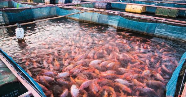 آموزش پرورش ماهی,روشهای پرورش ماهی,استخر پرورش ماهی قزل آلا