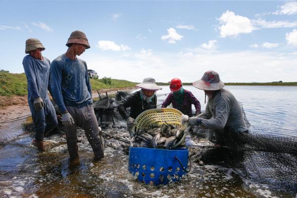 ویژگیهای ماهیان پرورشی,درآمد پرورش ماهی,ترکیبات آلی مورد نیاز ماهیها