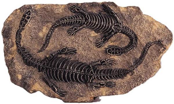 فسیل دایناسور,فسیل,فسیل جانوران