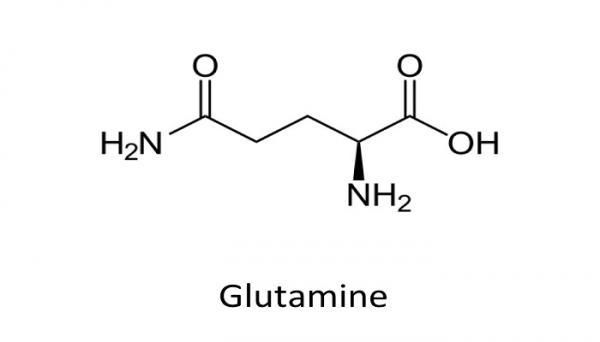 گلوتامات,انتقال دهنده های عصبی مغز,ساختار شیمیایی گلوتامات