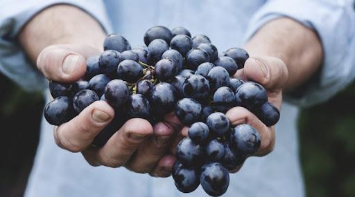 رژیم انگور در رفع گواتر,رژیم 5 هفته ای انگور,رژیم انگور