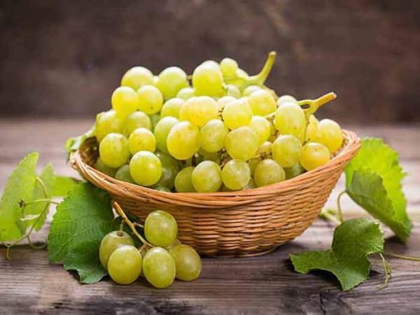 پیشگیری از بیماریهای قلبی با مصرف انگور,خواص انگور برای بدن,خواص انگور سبز
