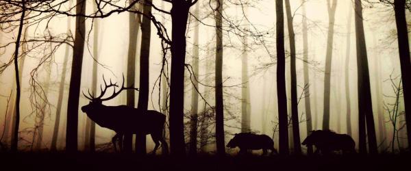 احکام شکار,احکام شکار کردن حیوانات,احکام شکار حیوانات با تفنگ