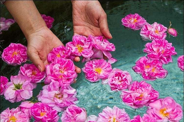 گلاب گیری کاشان,جاذبه های دیدنی کاشان,گلاب کاشان