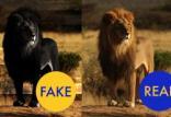 نحوه تشخیص تصاویر جعلی,شناسایی تصاویر جعلی,تصاویر فتوشاپی