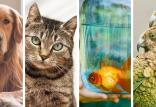 بهداشت حیوانات خانگی,انتقال بیماری از گربه به انسان,انتقال بیماری از ماهی به انسان