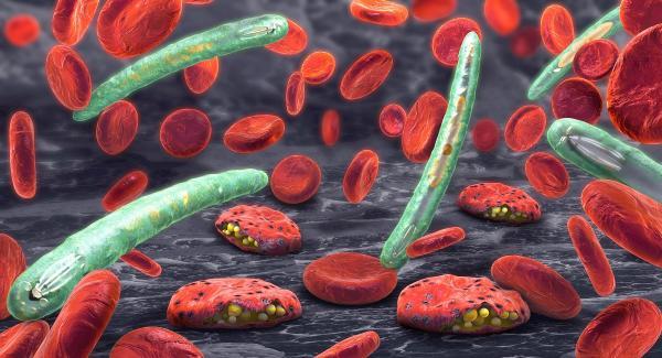 عوارض مالاریا,عکس حشره مالاریا,عامل بیماری مالاریا