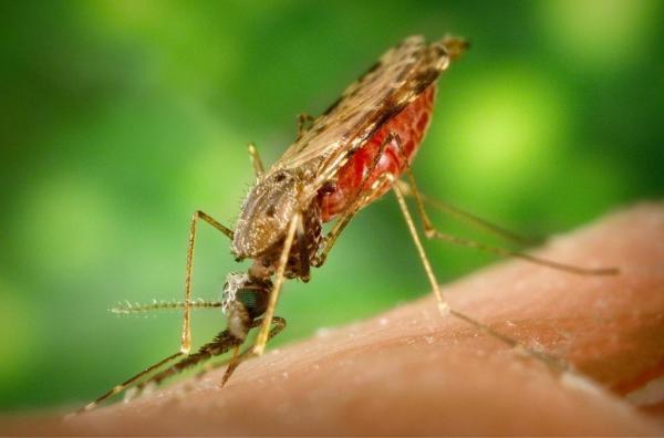 پیشگیری از بیماری مالاریا,بیماری مالاریا,درمان مالاریا