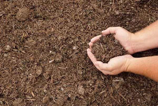 پرورش قارچ خوراکی,پرورش قارچ,شرایط پرورش قارچ