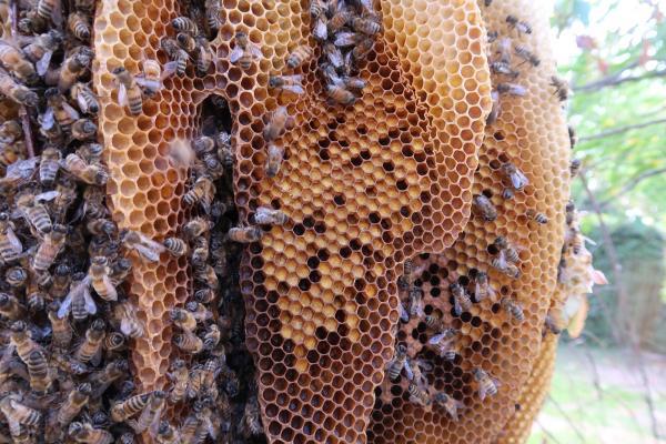 عکس عسل طبیعی,عسل طبیعی,روش تشخیص عسل طبیعی