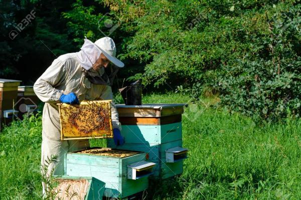 فواید عسل طبیعی,راههای تشخیص عسل طبیعی,عسل طبیعی