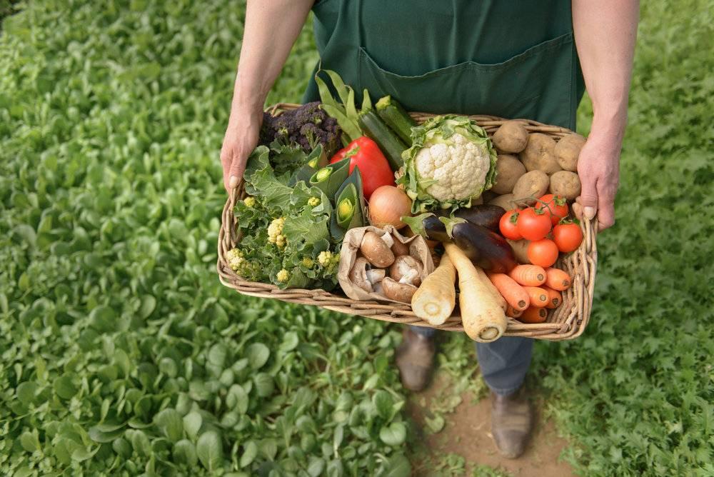 محصولات ارگانیک,ارگانیک,کشت محصولات ارگانیک