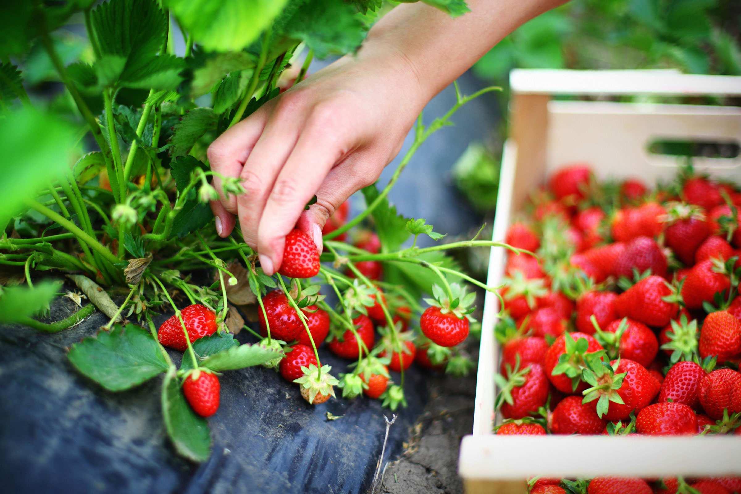 محصولات ارگانیک,ارگانیک,تشخیص محصولات ارگانیک