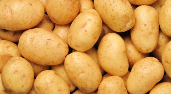 کاشت سیب زمینی,روش کاشت سیب زمینی,چگونگی کاشت سیب زمینی