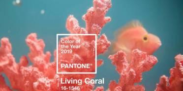 رنگ سال 2019,رنگ مرجانی رنگ سال 2010,رنگ مد سال 2019