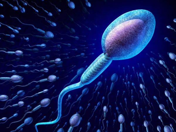 اسپرم,اسپرم مردان,راههای افزایش اسپرم