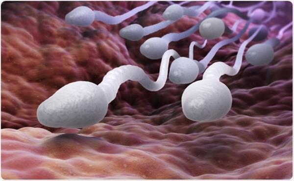 اسپرم برای بارداری,تحرک اسپرم,اسپرم