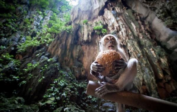 جاهای دیدنی مالزی,جاهای دیدنی مالزی جزیره مانوکان,جاهای دیدنی مالزی همراه با عکس