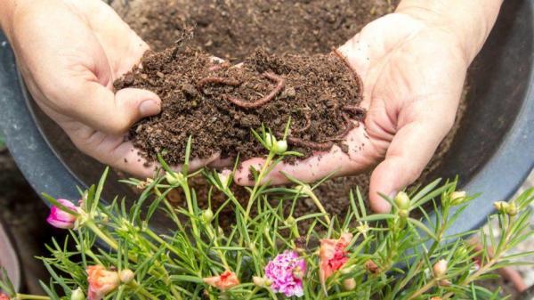 ورمی کمپوست,مراحل تولید ورمی کمپوست,کرم خاکی