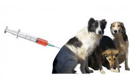 قانون حمایت از حیوانات,کشتن سگ های بی صاحب,محل نگهداری سگ های ولگرد,سگ کشی در تهران,عقیم سازی سگ ها