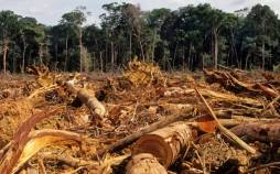 جنگل زدایی,جنگل زدایی در ایران,راه های مقابله با جنگل زدایی