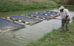 پرورش ماهی,پرورش ماهی قزل آلا,آموزش پرورش ماهی قزل آلا