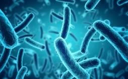فواید میکروب برای انسان،نقش میکروب در سلامت بدن،سلامت انسان با وجود میکروب در بدن